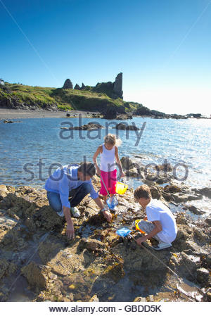 Exploring the rockpools beside the beach by Dunure Castle, Dunure, South Ayrshire, Scotland. - Stock Photo
