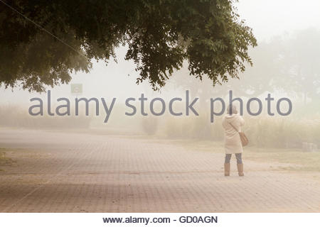 Woman photographer standing in the fog next to some trees - Stock Photo