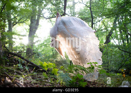 A young blonde woman girl wearing an old-fashioned white wedding dress frock in a woodland on a summer evening, - Stockfoto