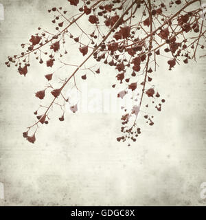 textured old paper background with australian flame tree - Stock Photo