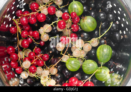 mixed currant berries in colander - Stock Photo