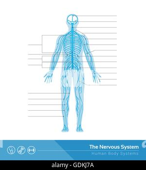 The human nervous system vector medical illustration - Stock Photo