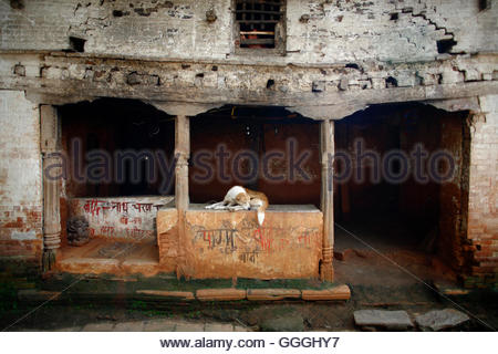 A woman looks out from a window as her dog sleeps at the entrance of her home in the premises of the Pashupatinath - Stock Photo