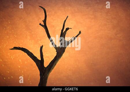 Dead tree in front of red sand dunes, Deadvlei at Sossusvlei, Namibia - Stock Photo