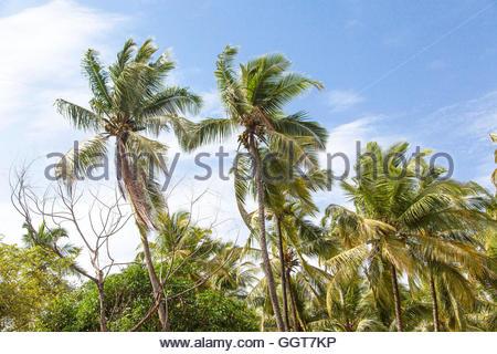 north palm beach hindu single men Ratio of single men to single women,  palm beach county, fl: 79: pasco county, fl: 75:  north carolina north dakota ohio oklahoma.