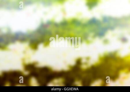 grüne Wassermelone, Unschärfe - Stockfoto