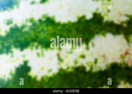 green watermelon, defocus - Stock Photo