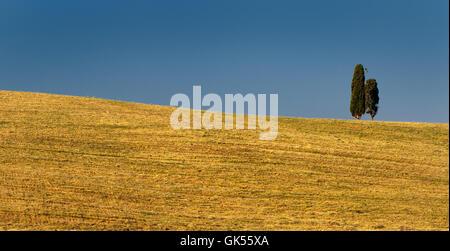 zwei Zypressen - Stockfoto