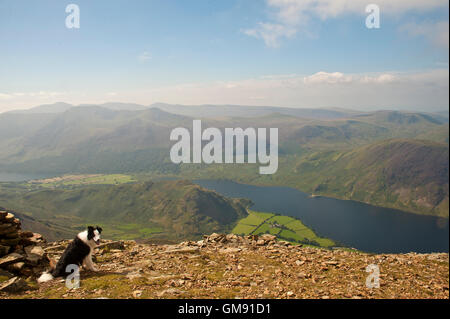 portrait of border collie on Grasmoor above Crummock Water, Cumbria - Stockfoto