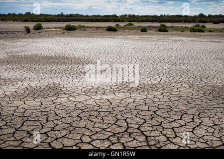 Dried pond with cracked mud and glasswort in Camargue, France - Stock Photo