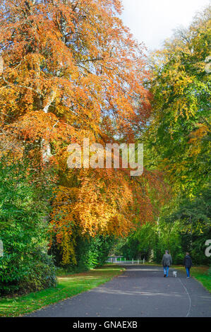 Couple walking with dog in Beautiful autumn park - Stock Photo