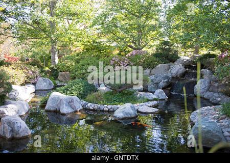 Japanese garden and koi pond stock photo royalty free for Japanese koi garden san jose