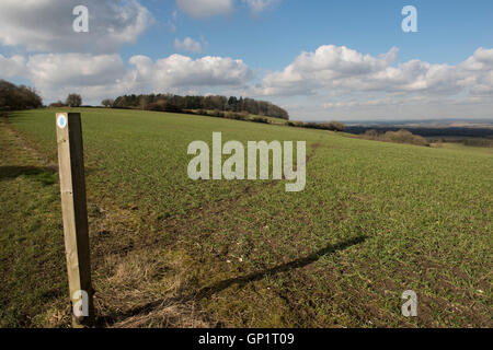 Footpath sign and path cut through stages of a winter wheat field on the North Wessex Downs in February - Stockfoto