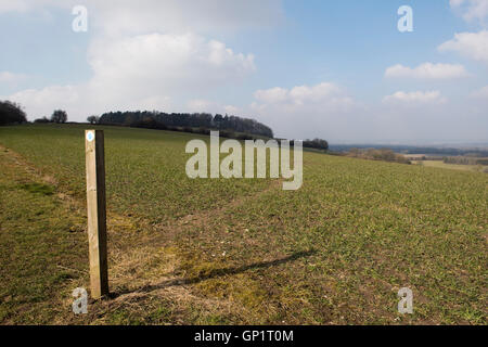 Footpath sign and path cut through stages of a winter wheat field on the North Wessex Downs in March - Stock Photo