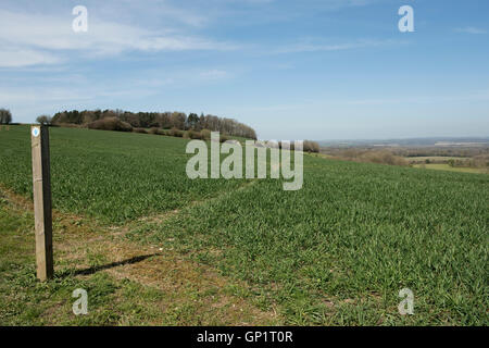 Footpath sign and path cut through stages of a winter wheat field on the North Wessex Downs in April - Stock Photo