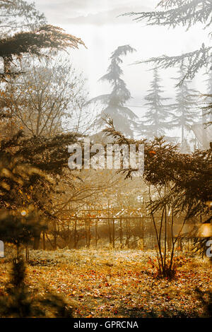 An autumn forest meadow with fallen color leaves and tree silhouettes in the early morning. - Stock Photo