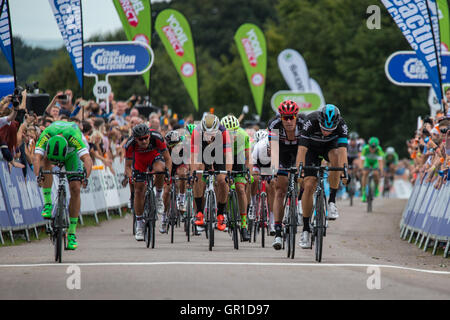 Cheshire, UK. 6th September, 2016. The main peloton crosses the line in Stage 3 of the 2016 Tour of Britain, Tatton - Stock Photo
