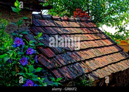 Old Flat Red Clay Roof Tiles With Lichen Stock Photo