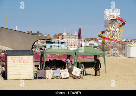Donkey Rides on the sandy beach with Donkeys shaded from sun in seaside resort. Melcombe Regis, Weymouth, Dorset, - Stock Photo