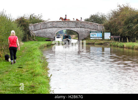 A woman walking her dog on the Shropshire Union Canal at Audlem at bridge 80 with horses and riders crossing and - Stock Photo