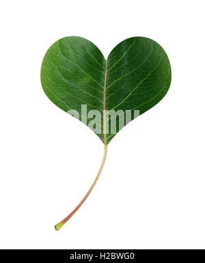 green leaf in shape of heart - Stock Photo