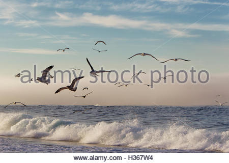 seagulls flying low over the ocean, California - Stock Photo