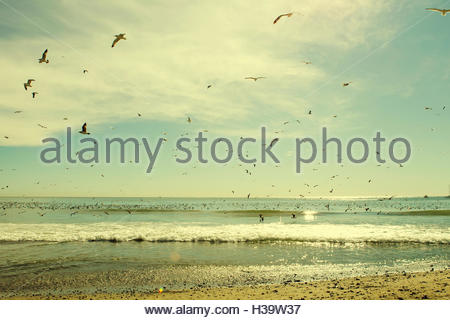 seagulls over the ocean, doheny park, california - Stock Photo
