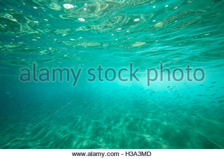 Underwater School Of Fish Swimming Undersea - Stock Photo