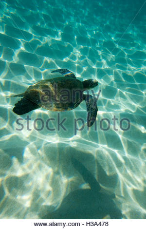 Fish Swimming Underwater - Stock Photo