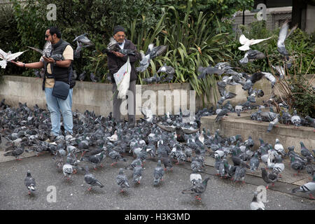 London,UK,8th October 2016,Pigeons flock to  Marble Arch in London as two men feed them food from a carrier bag©Keith - Stock Photo
