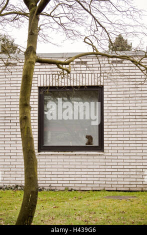Bungalow, window, Venetian blind, tree, bald, house, residential house, building, outside, window, closed, sealed, - Stock Photo