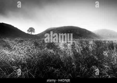 Sycamore Gap on Hadrian's Wall, Robin Hood's tree, on a misty winter's morning Northumberland - Stock Photo