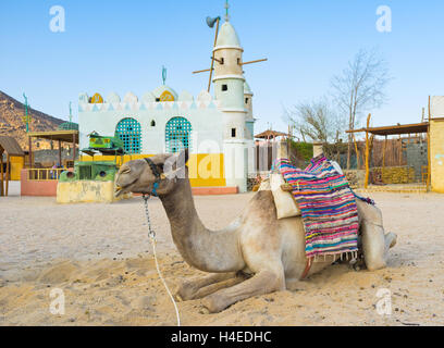 The camel in Bedouin village with the colorful mosque on background, Sahara, Egypt - Stock Photo
