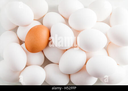 Chicken white background raw eggs and one brown/ - Stock Photo