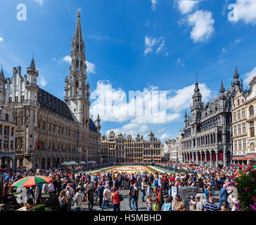 Brussels Grand Place. The 2016 Carpet of Flowers in the Grand Place (Grote Markt) with the Town Hall to the left, - Stock Photo