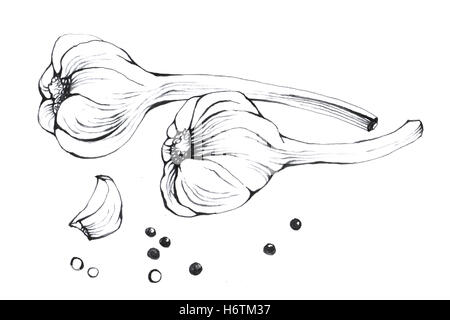 Garlic. Hand drawn Black and white illustration vegetable on white background. - Stock Photo