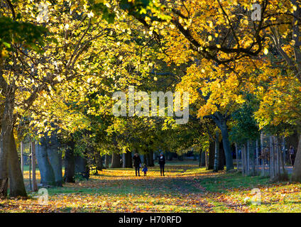 The Meadows, Edinburgh, Scotland. The low autumn sunlight casts long shadows as it shines through the trees on a - Stock Photo
