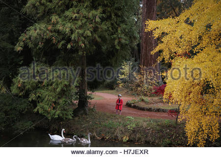 Enchanted autumn forest. Swans and little girl in red coat. - Stock Photo