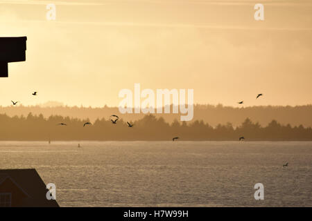 A flock of birds is silhouetted by the intense sunset. - Stock Photo