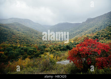 mountains in autumn forest, with red-yellow leaves of rain and fog - Stock Photo