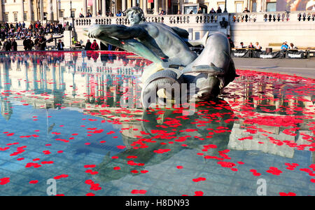 London, UK. 11th November, 2016.Poppies are scattered in the fountains of Trafalgar Square to celebrate Armistice - Stockfoto