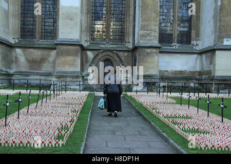 London, UK. 11th November, 2016. A woman walks past  crosses planted at the Fields of Remembrance at Westminster - Stockfoto