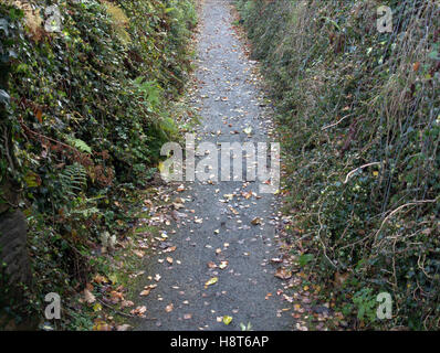 leaf covered steps and path background - Stock Photo