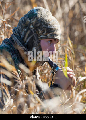 Lay Down Blinds >> Duck / Goose Hunter Calling to Waterfowl as They Fly Past Blind Stock Photo, Royalty Free Image ...