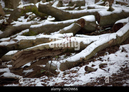 Snow covered logs or tree trunks or branches - Stock Photo