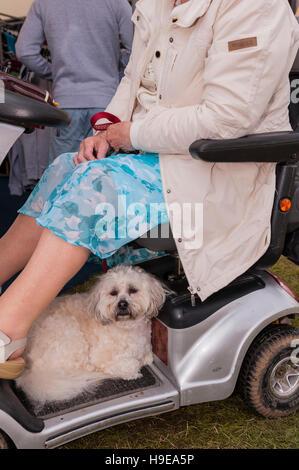 Charity Dog Walking Merseyside