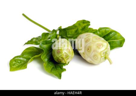Noni (Also named as Morinda Citrifolia, Rubiaceae Noni, great morinda, indian mulberry, beach mulberry, cheese fruit, - Stock Photo