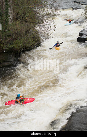 High angle view of kayakers paddling River Dee white water rapids, Llangollen, North Wales - Stock Photo