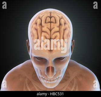 an analysis of the human brain The model(s) might cover specific brain diseases or, alternatively, tackle   federated analysis of human intracerebral stimulation and recording data -  medical.