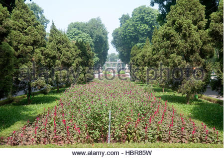 Hanoi Vietnam Thong Nhat Park borders with Gomphrena globosa - Globe Amaranth or Bachelor Button - Stock Photo